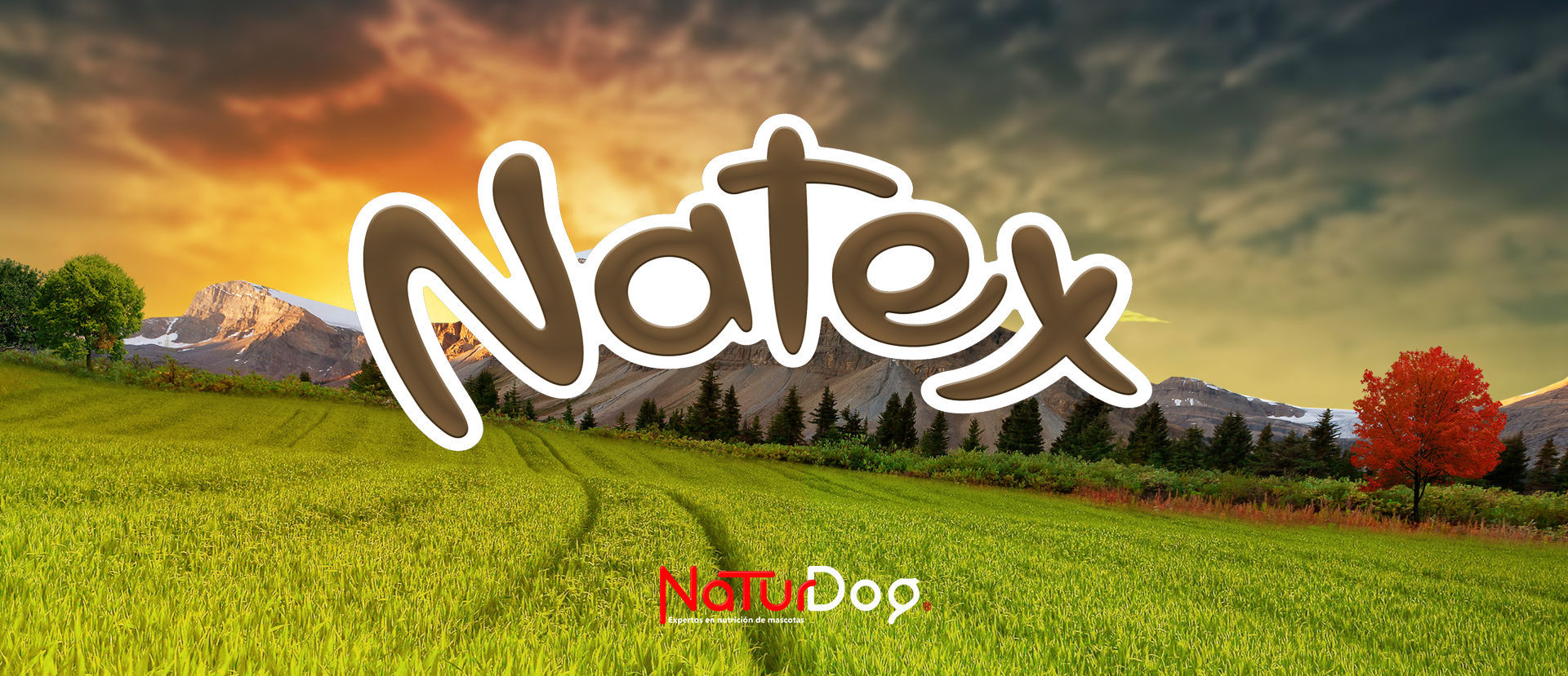 Natex cat