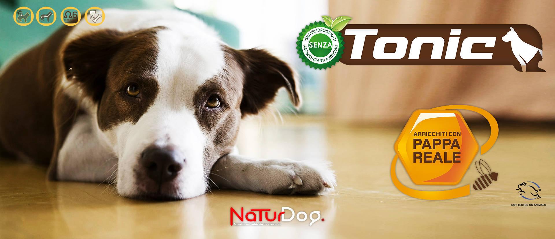 Tonic dog