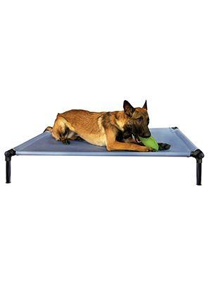 Starmark dog zone pro training bed